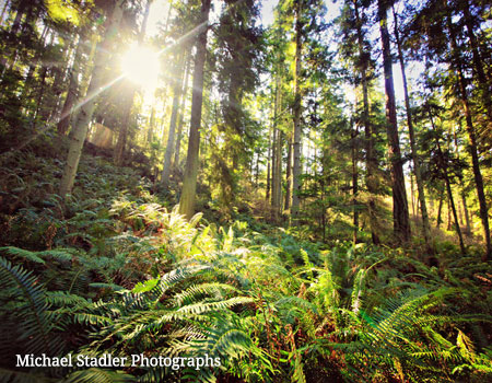 Whidbey Island forest with sunlight