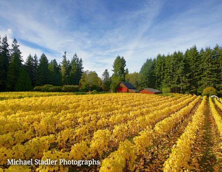Whidbey Island vineyard in the autumn